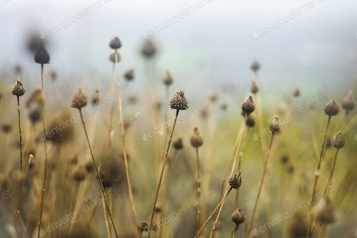 Dry grass with flower heads