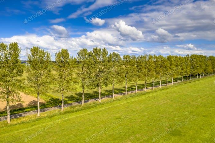 Traditional countryside scene  with windbreak lane