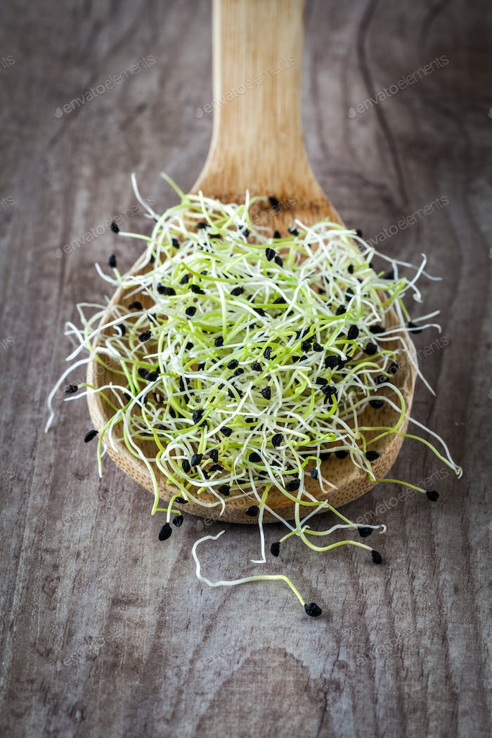 Onion germ sprouts