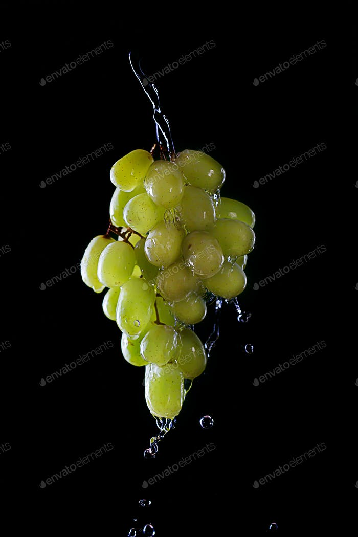 Branch of Green grape isolated on dark background