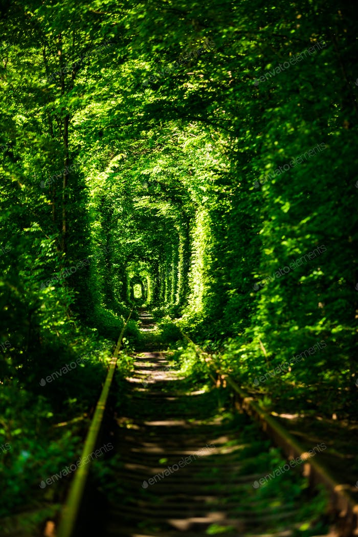 Beautiful tunnel of green trees . Tunnel of love.