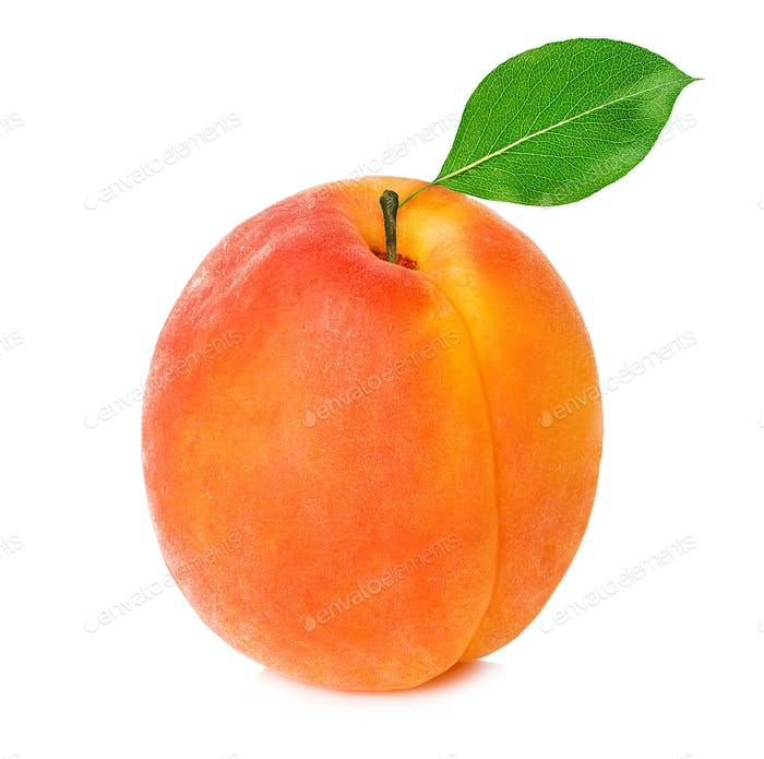 Apricot with leaf close-up isolated on a white background.