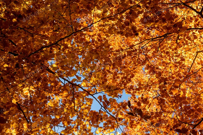 Autumn leaves with the blue sky background