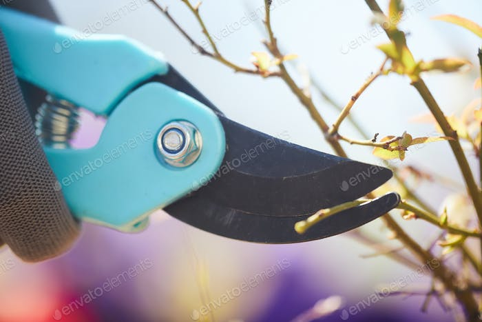 Garden Clippers Cutting Plants Close Up