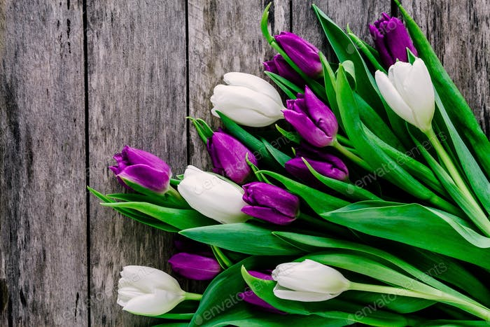 Purple and white tulips bouquet on a rustic wooden background.