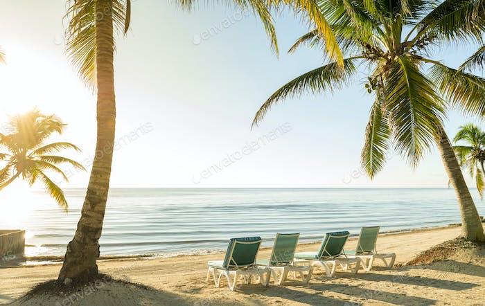 Strandurlaub Mit Palmen Und Liegestühlen