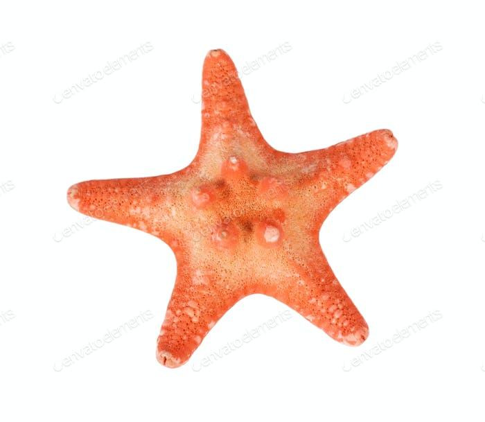 Six-pointed orange starfish