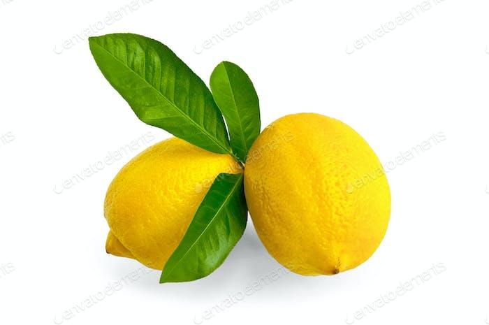 Лимоны два с листьями