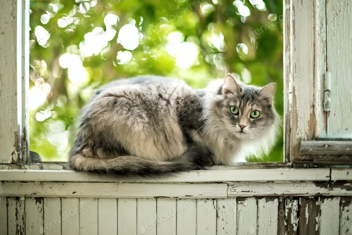 Gray Cat sitting on a balcony with summer sunlight