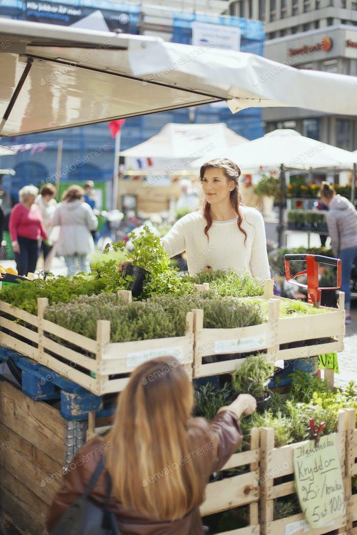 Frauen kaufen Topfpflanzen auf dem Markt