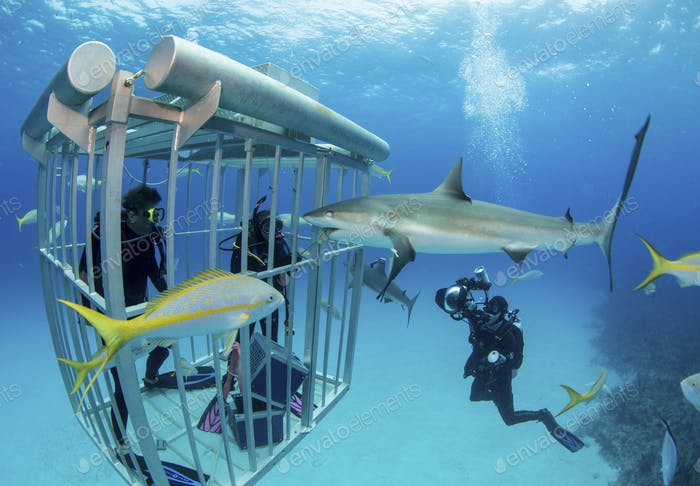 Image from Shark Shootout, 2013.  An underwater photo event hosted by Stephen Frink and Stuart Cove