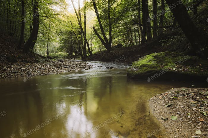 water in forest river scenery, natural serene landscape