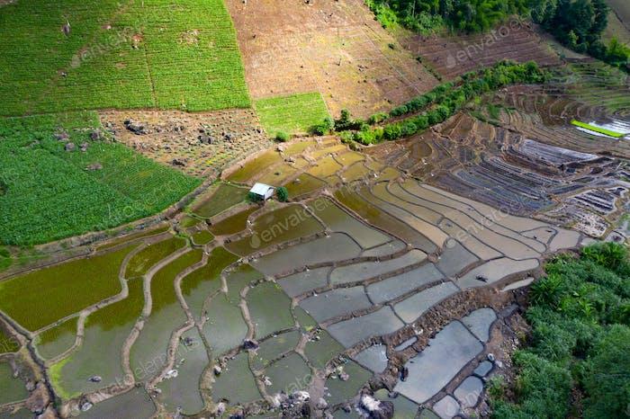 Terrassenreis Feld in Chiang Mai, Thailand.