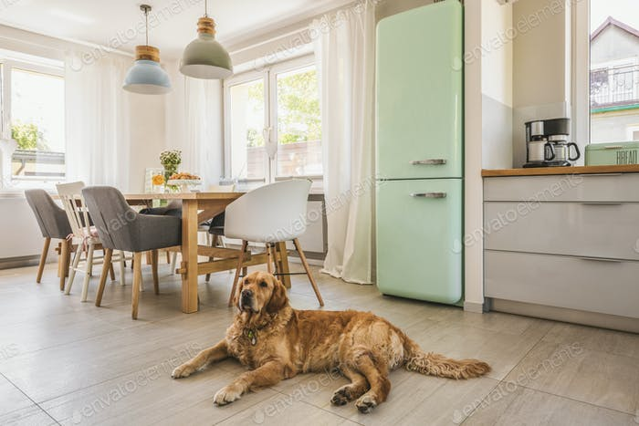 Dog next to dining table and chairs under lamps in house interio