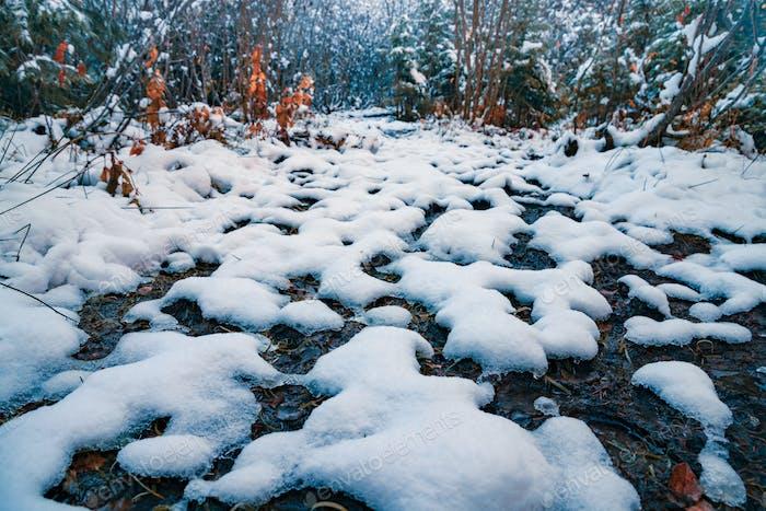 Un poco de nieve esponjosa blanca como la nieve en pequeños charcos transparentes en un bosque de invierno soleado