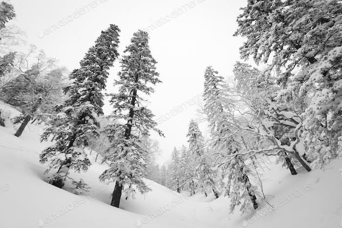 Mt. Kurodake  Hokkaido, Japan wintery hiking trail