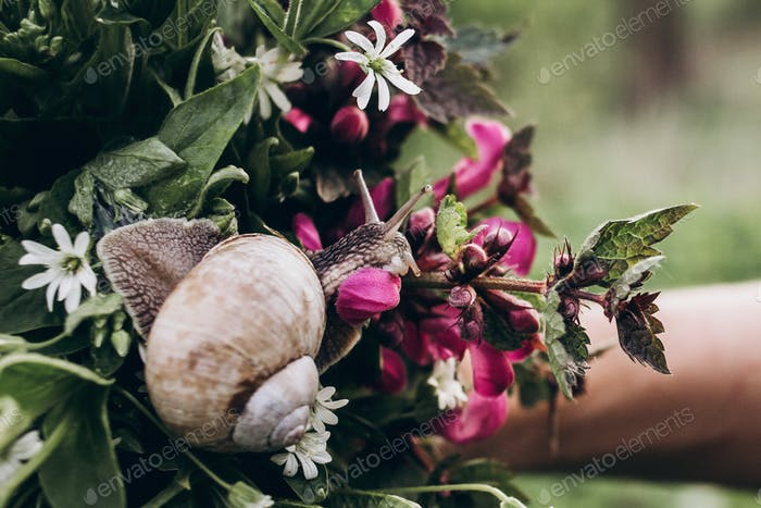 cute big snail on colorful spring bouquet of wildflower