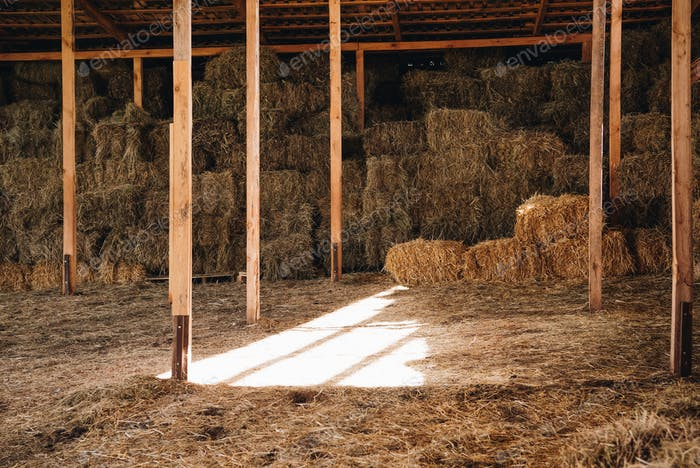 stacked hay in agricultural stall at farmhouse