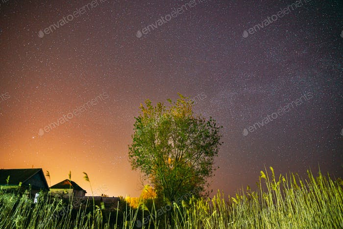 Milky Way Galaxy In Night Starry Sky Above Young Green Lonely Tree In Spring Night. Glowing Stars