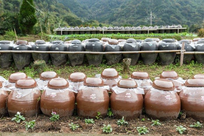 Row of Vinegar Barrel