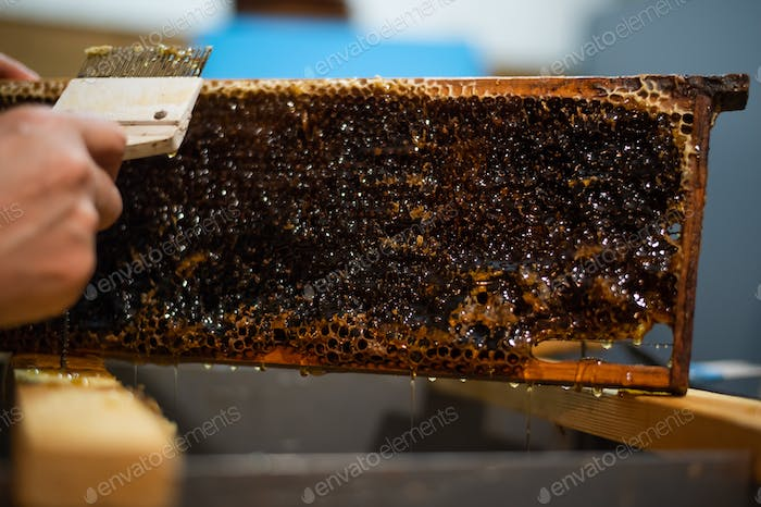 Beekeeper removes excess beeswax with the scraper by hand, preparing for pumping honey. Beekeeper