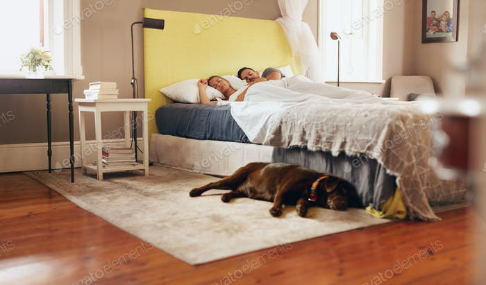 Young couple sleeping comfortably on bed with dog on floor