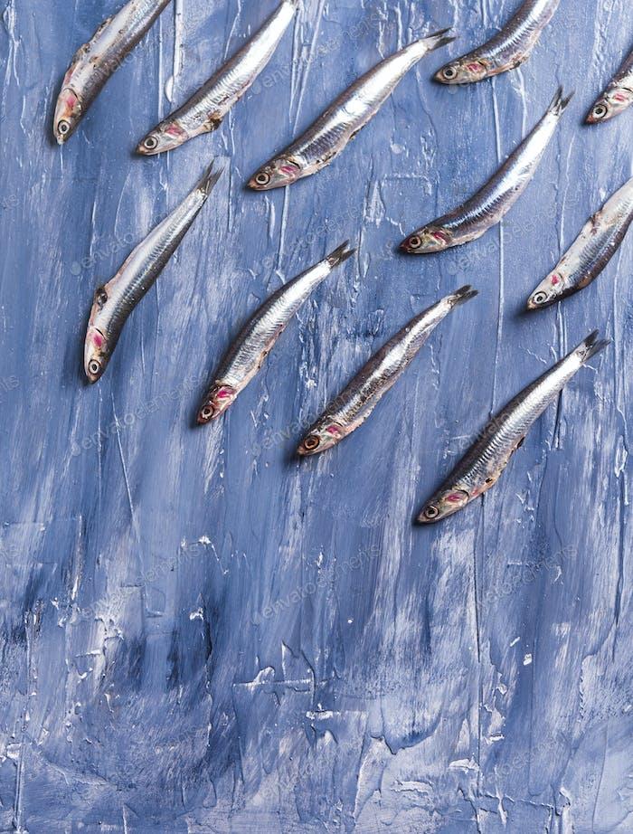 Patrón de peces. Anchoas frescas sobre azul