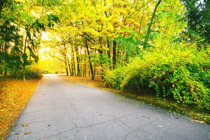 Asphalt road in park with colorful leaves