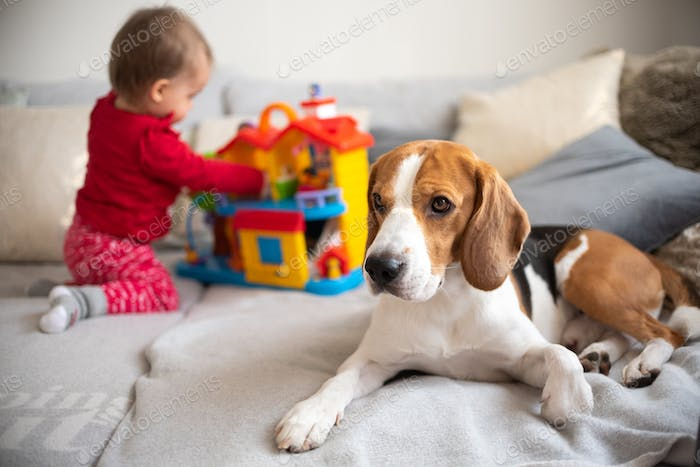 Dog with toddler in background playing on a couch.