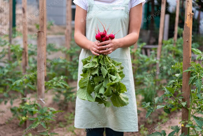 Young woman in the garden holds radish.