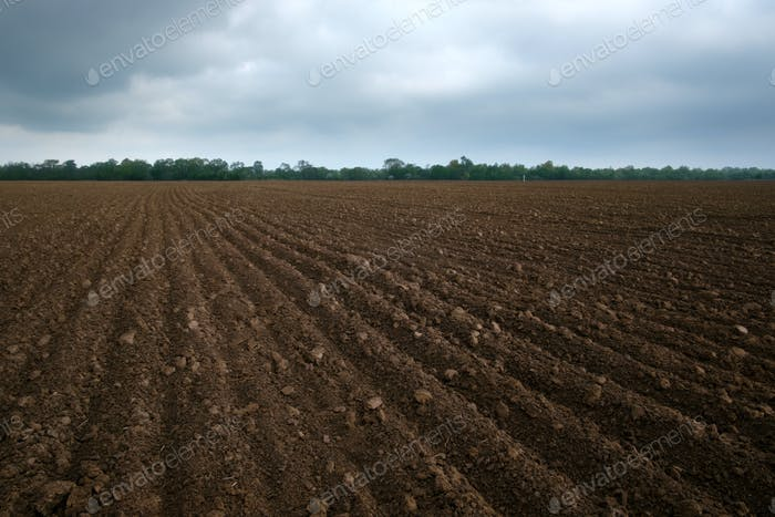 Agriculture field on spring time