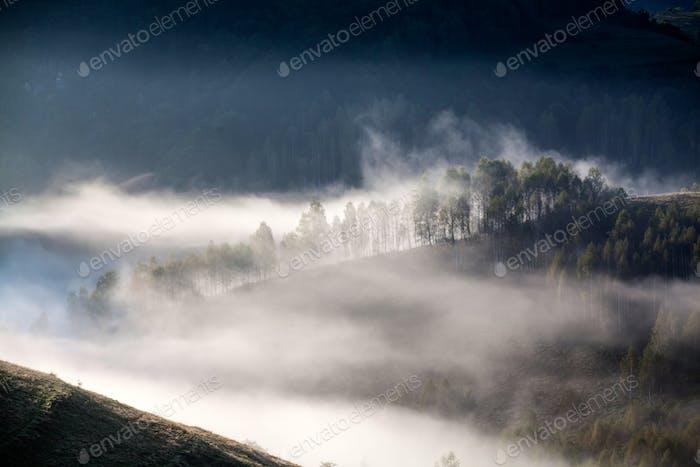 Summer morning mist