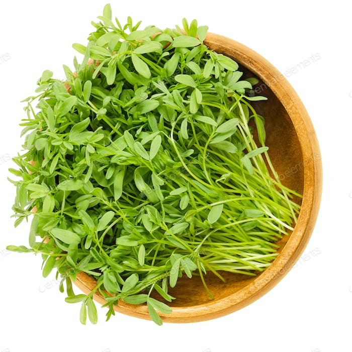 Le Puy lentil sprouts in wooden bowl over white