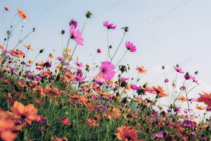 Cosmos with colorful at sky