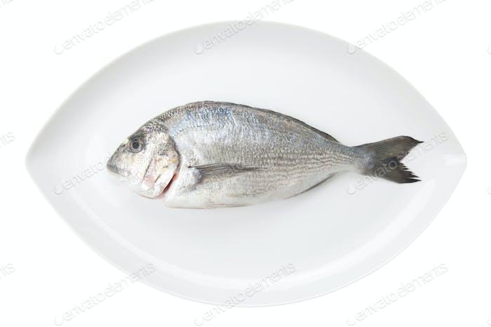 Dorada seafood on a white oval dish. Bream fish.