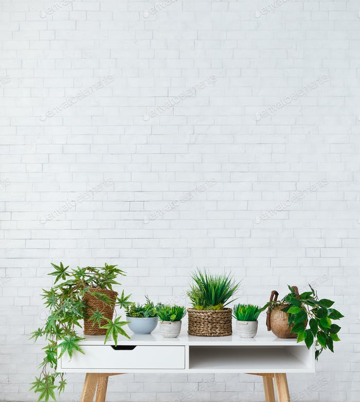 Collection of houseplants in pots over white wall