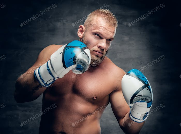 Portrait of bearded aggressive boxer in action over grey background.