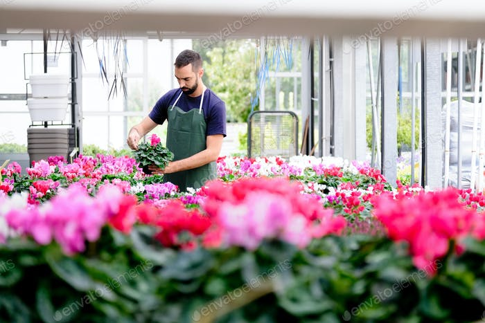 People Working in Flower Shop