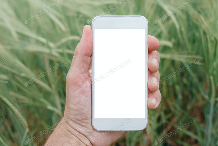 Mock up smartphone screen in barley field