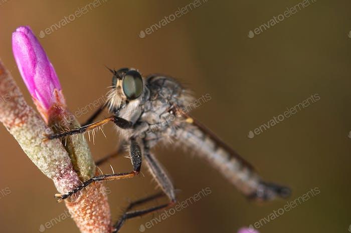 Killer Fly
