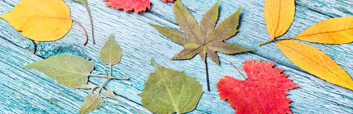 October leaves for herbarium