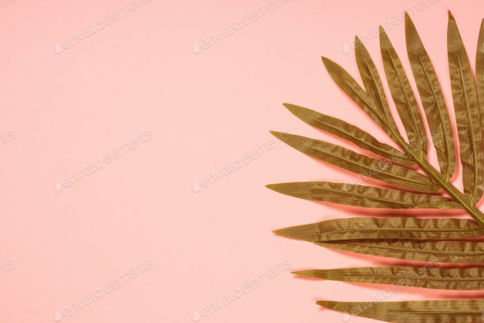 Palm leaf on coral background top view