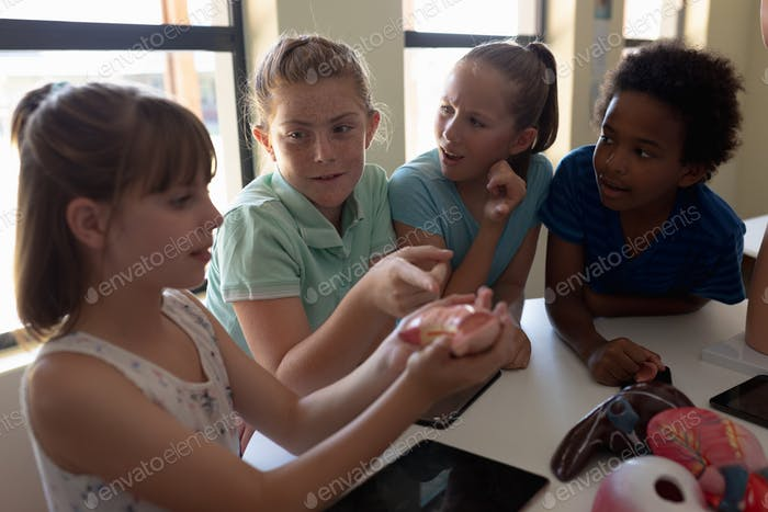 Group of elementary school kids working with anatomy model