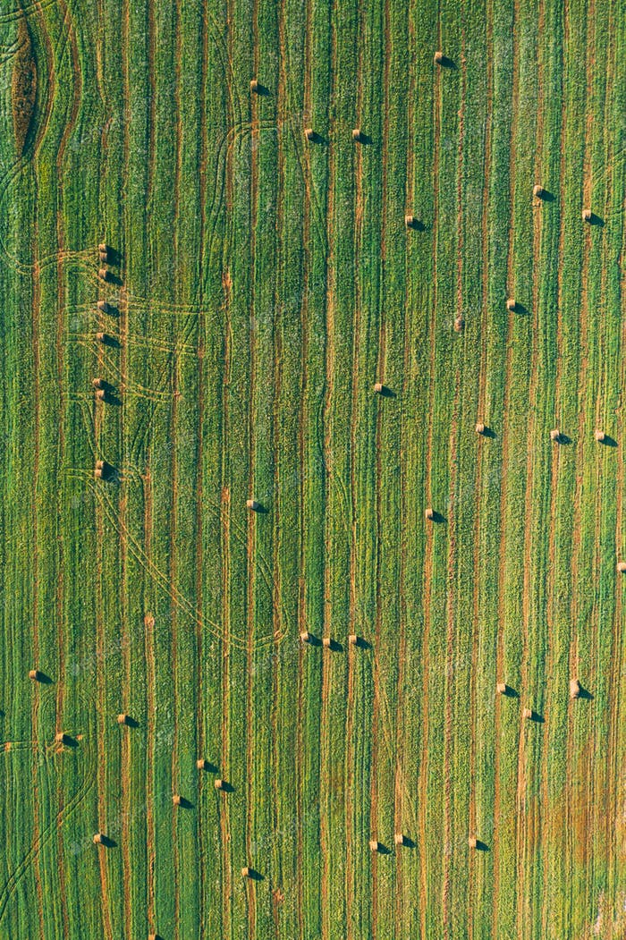 Aerial View of Summer Field Landscape With With Dry Hay Bales During Harvest. Trails Lines on