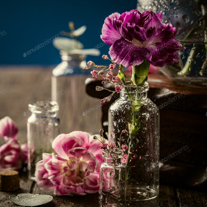 Beautiful purple carnation in glass vase