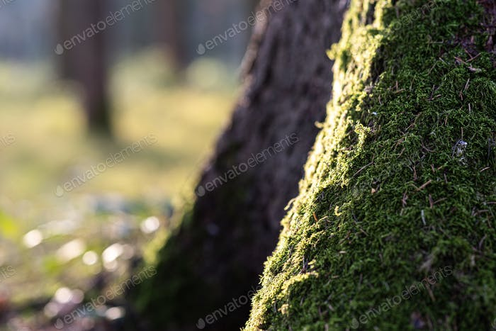 Moss on a tree in forest.