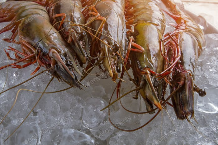 Raw shrimps on ice cubes