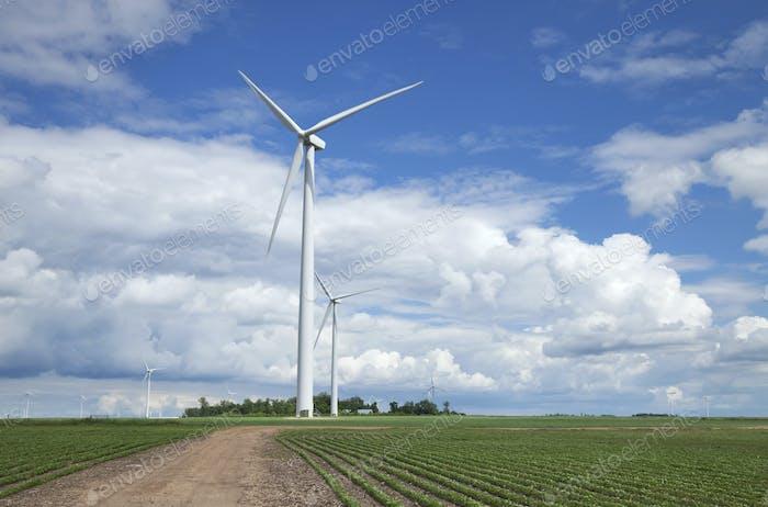 Windkraftanlagen und Sojabohnenfelder in Mittlerer Westen USA