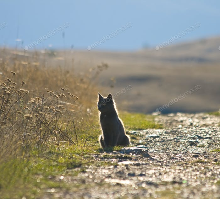 Grey cat by road