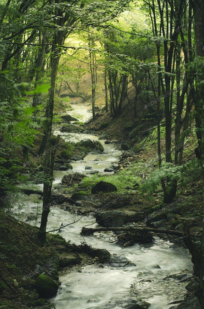 forest river in summer, green vivid natural landscape